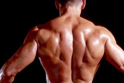 bodybuilding trainingsplan muskelaufbau anfaenger